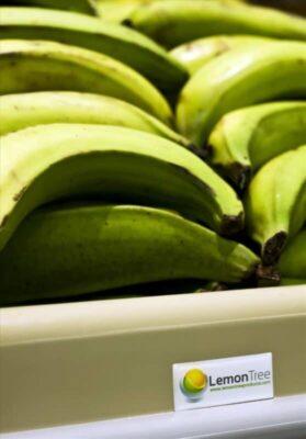 banana produce table displays in BEST VALUE FOODMART Ontario closeup